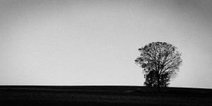 Lonely-Tree_IMG_0477.jpg